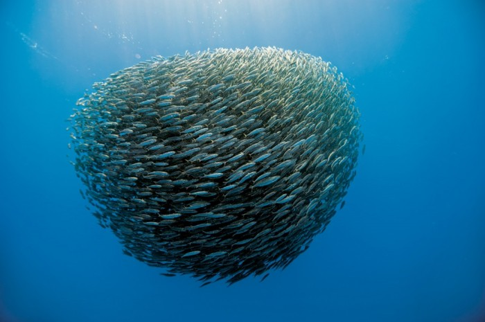 160_atlantique_poissons-1024x681